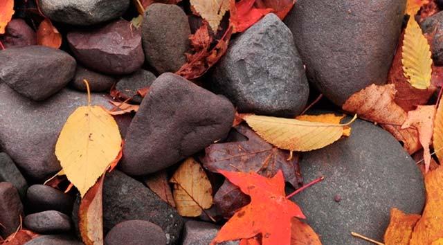 Colores que nos ofrece la época otoñal